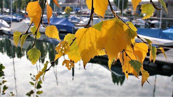 Autumn Gold, Yellow Leaves, Autumn, Port