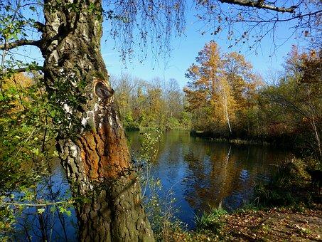 Golden Autumn, Lake, Mirroring, Birch