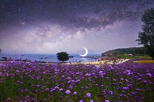 Dalian, Delight Island, Romantic, Twilight, Purple