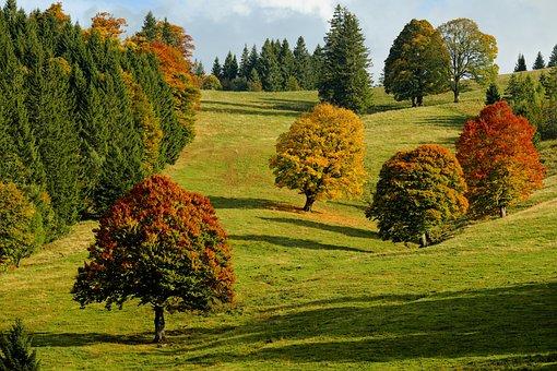 Autumn, Autumn Forest, Trees, Fall Foliage