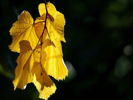 Autumn, Golden, Golden Autumn, Golden October, October