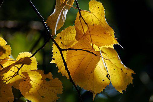 Autumn, Golden, Golden Autumn, Golden October, Leaves