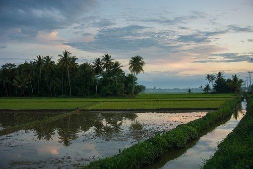 Rice Field, Rice, Sunset, Landscape, Sun, Indonesia