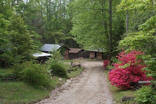Spring, Georgia, Azaleas, Ga, County, Cabin, Forest