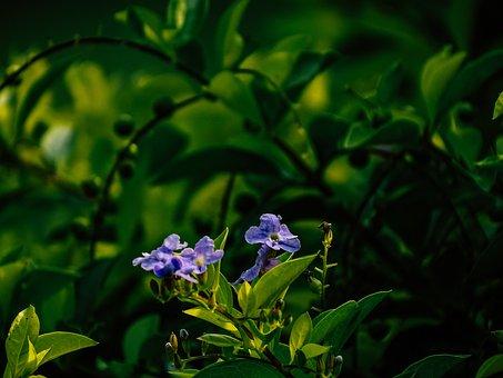 Purple Flower, Flower, Spring, Nature, Purple Daisy