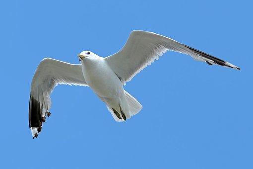Seagull, Sea, Holiday, Summer, Seevogel
