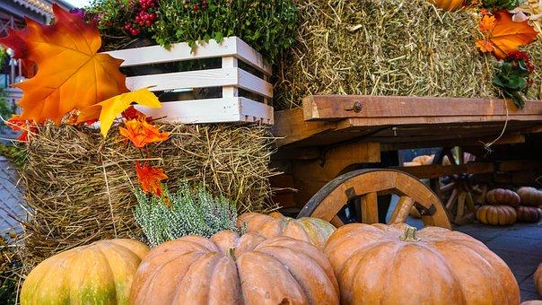 Holloween, Autumn, Fall, Orange, Thanksgiving, Pumpkin