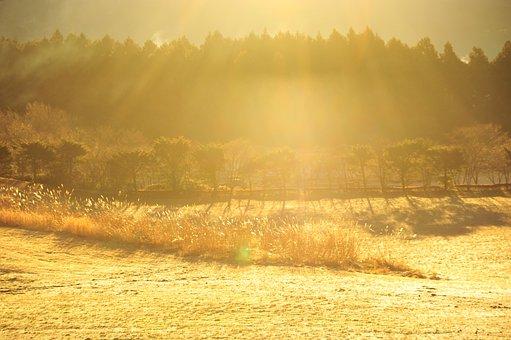 Morning Fog, Ray, Winter