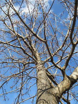 Tree, Deciduous, Winter, Branches, Nature, Natural, Sky