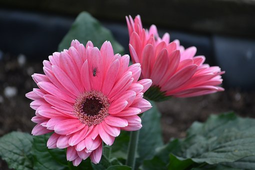 Flower, Pink, Floral, Nature, Blossom, Bloom, Bright