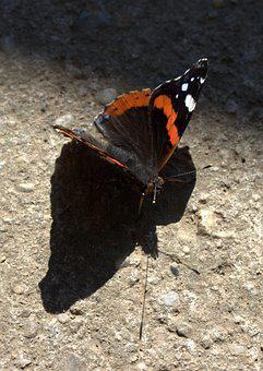 Butterfly, Black, Red, Coloring, Wings, Shadow