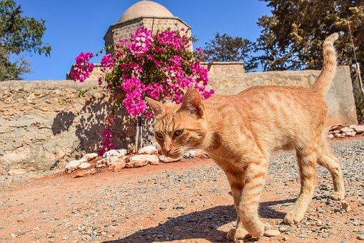 Cat, Stray, Red, Striped, Tabby, Animal, Kitty, Walking