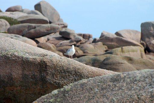 Seagull, Rock, Coast, Seevogel, Birds, Water Bird, Sea
