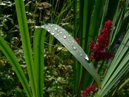 Leaf, Drop Of Water, Raindrop, Dew, Macro, Drip