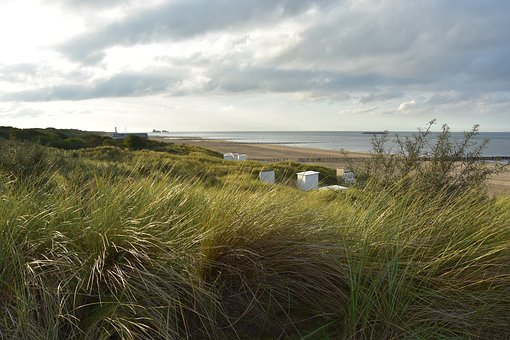 Dune Grass, North Sea, Dune Landscape, Netherlands