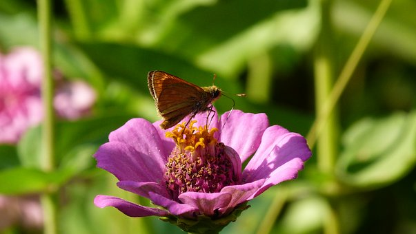 Flower, Butterfly, Nature, Macro, Forage
