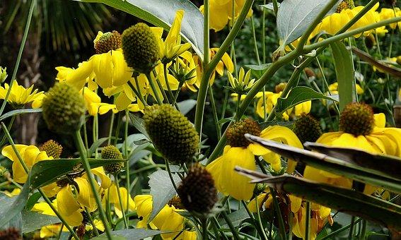 Flowers, Yellow, Yellow Flowers, Yellow Flower, Flower