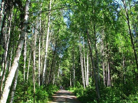 City Park, Forest, Trees, Sun, Nature, Landscape