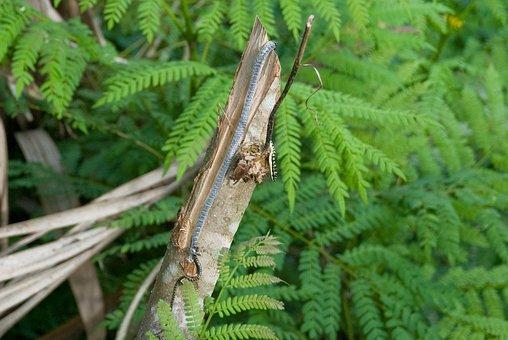 Golden Tree Snake, Thailand, Reptile, Golden, Snake