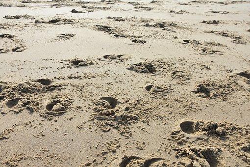 Hoof Prints, Hoofprints, Beach, Sand, Sand Beach