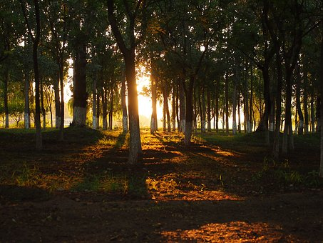 Woods, Backlighting, Shade, Jungle, At Dusk