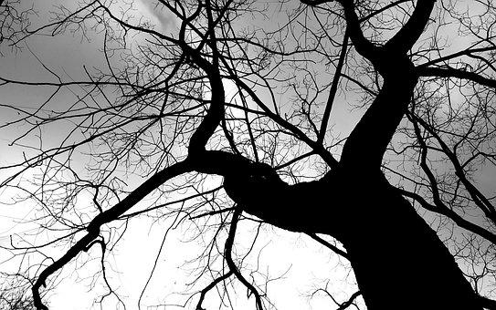 Tree, Crown, Aesthetic, Log, Nature, Winter, Kahl