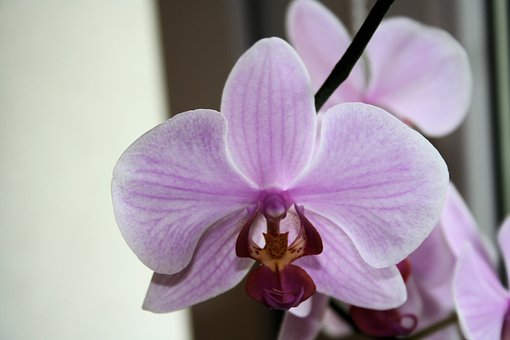 Flower, Orchis, Macro, Nature, Blooming, Orchid