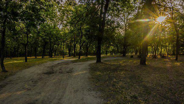 Road, Forest, Sun, Rays