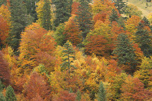 Autumn, Autumn Mood, Colorful, Mixed Forest