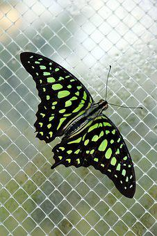 Neon, Green, Butterfly, Bright, Glow, Colorful, Black