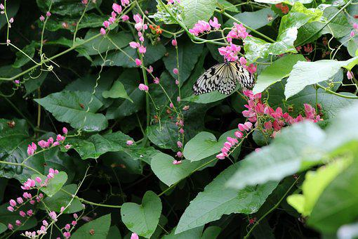 Butterfly, White, Branch, Leaf, Leaves, Green, Black