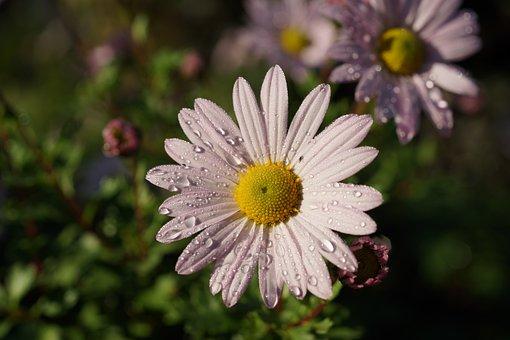 Blossom, Bloom, Flower, Autumn, Close, Filigree