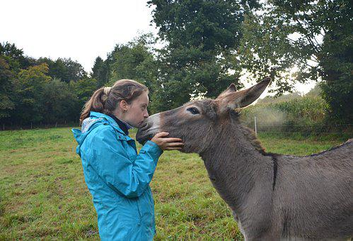 Kiss, Girl, Donkey, Complicity, Tenderness, Affection