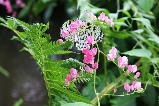 Black, White, Butterfly, Black And White, Floral
