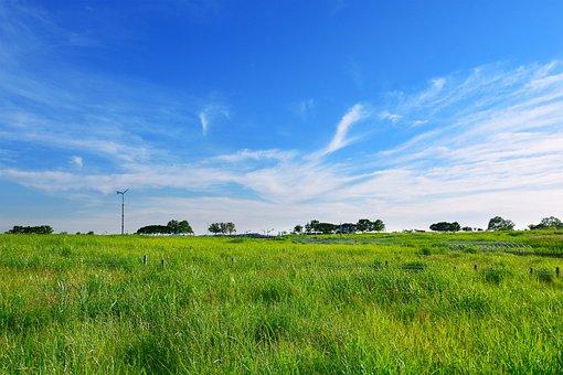 Grassland, Grass, Meadow, Silver Grass, August, Cloud