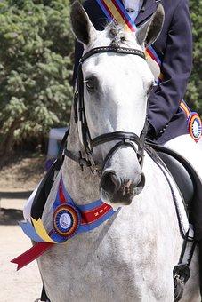 Horse Show, Gray Stallion, White Horse, Champion