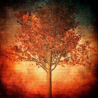 Autumn, Fall Foliage, Tree, Leaves, Herbstimpression