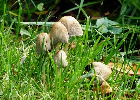 Mushrooms, Autumn, Nature, Mushroom Picking, Brown