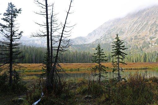 Landscape, Misty, Autumn, Lake, Forest, Nature, Scenic