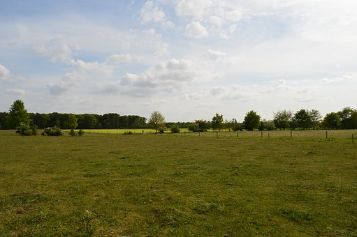 Meadow, Green Grass, Green, Nature, Vegetation, Summer