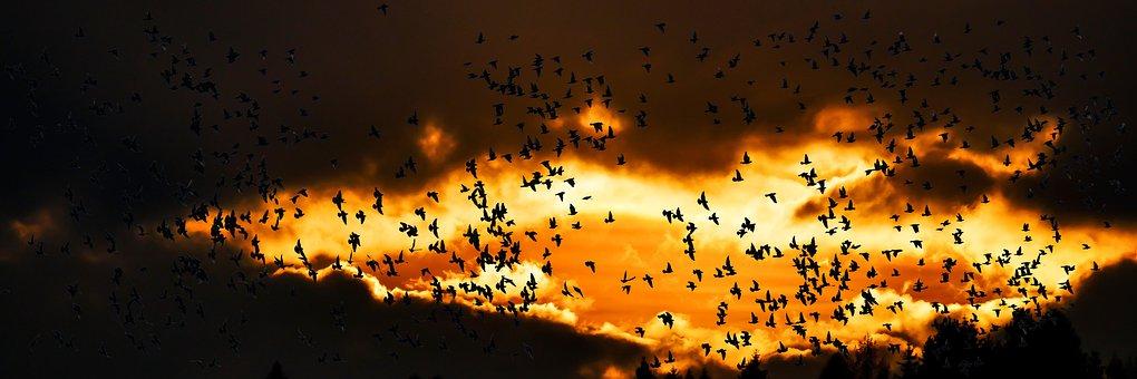 Nature, Animals, Bird, Migratory Bird, Fly, South, Sky
