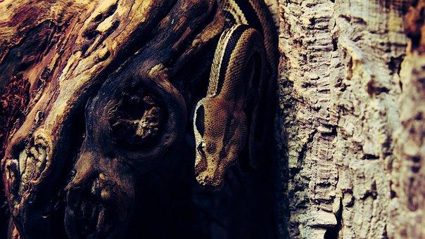 Snake, Aggressive, Reptile, Tree, Lizard, Exotic