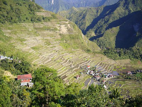 Rice, Phillipines, Agriculture, Asia, Countryside