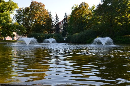 Park, Pond, Fountain, Autumn, Duck, Afternoon, The Sun