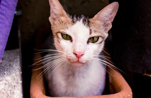 Cat, Cute, Eyes, Animal, Kitten, Pet, Domestic, Kitty