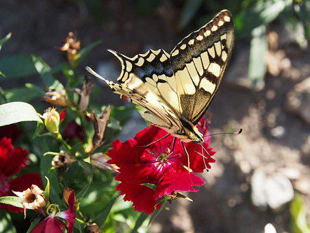 Butterfly, Garden, Flowers, Insect, Nature, Yellow