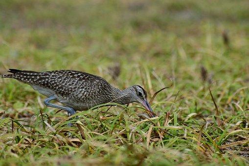 Animal, Sea, Beach, Grass, Green, Wild Birds