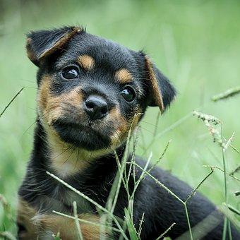 Puppy, Green, Black Tan, Dog, Cute, Dreaming