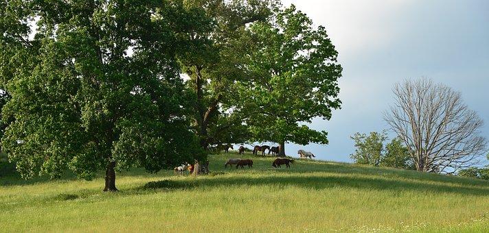 Horse, Fields, Pasture, North Carolina, Asheville