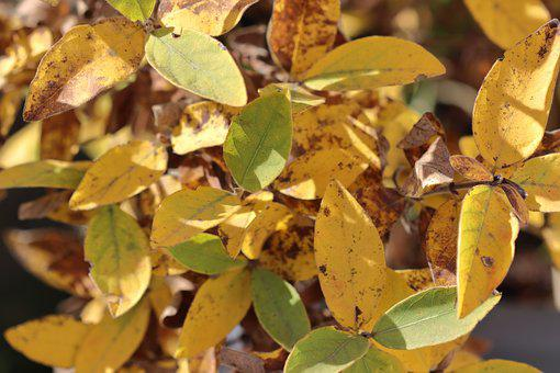 Autumn, Leaves, Golden Autumn, Fall Color, Yellow